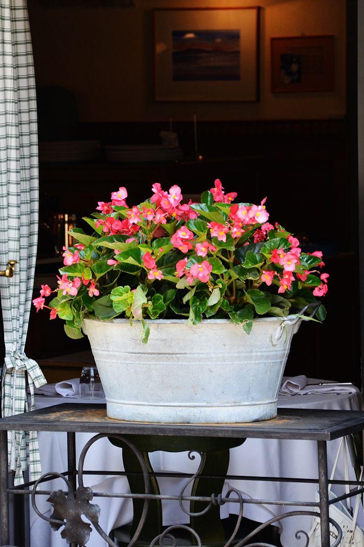 Bégonias en fleur à la fenêtre d'un restaurant à Bergame