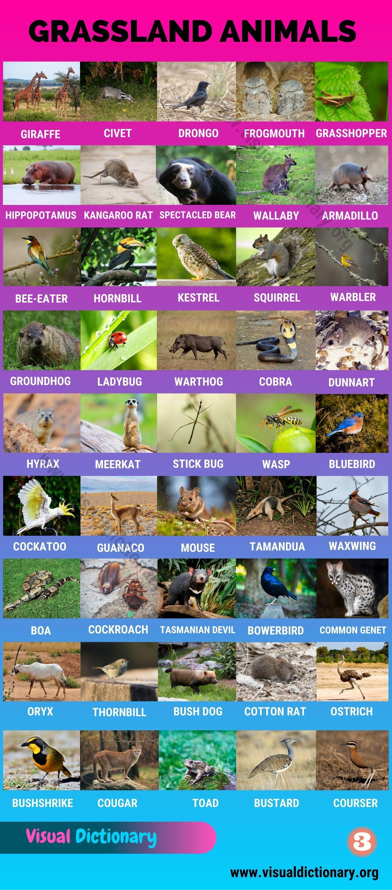 Grassland Animals Big List Of 160 Grassland Animals In