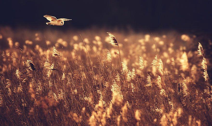 elisa.net » Ei pöllömpää puuhaa olla pöllö!