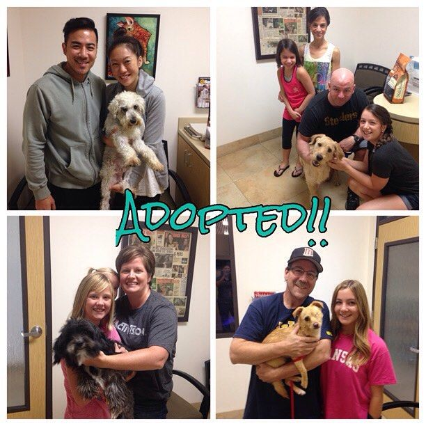 Adopted! Happy tails for Watson, Deeds, Winston and Leela!! Congrats pups! We wish you all the best.