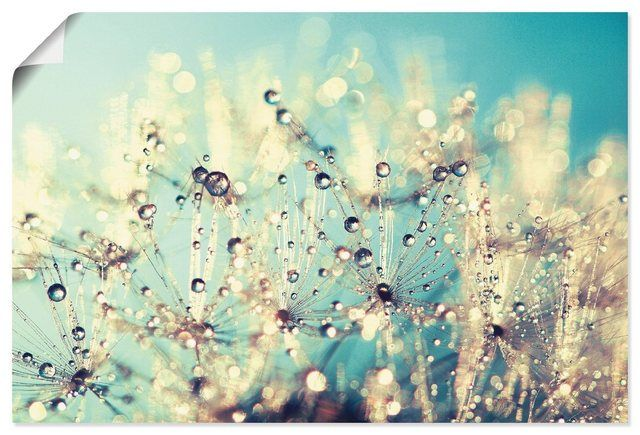 "Photo of Artland Art Print Poster ""Julia Delgado: Dandelion wetted with dew drops"" OTTO"