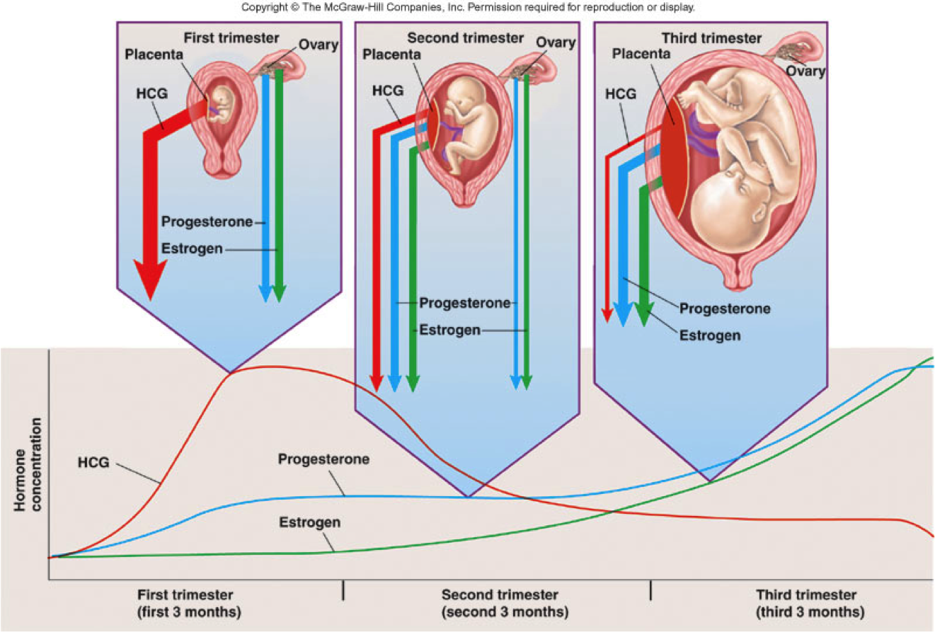 Image Result For Pregnancy Diagnosis Hormone Med Obsgyn Index Of Schematics Byfunction Tone Control Passivetonecontrol Hormones Pregnancy1318031288477 1321893