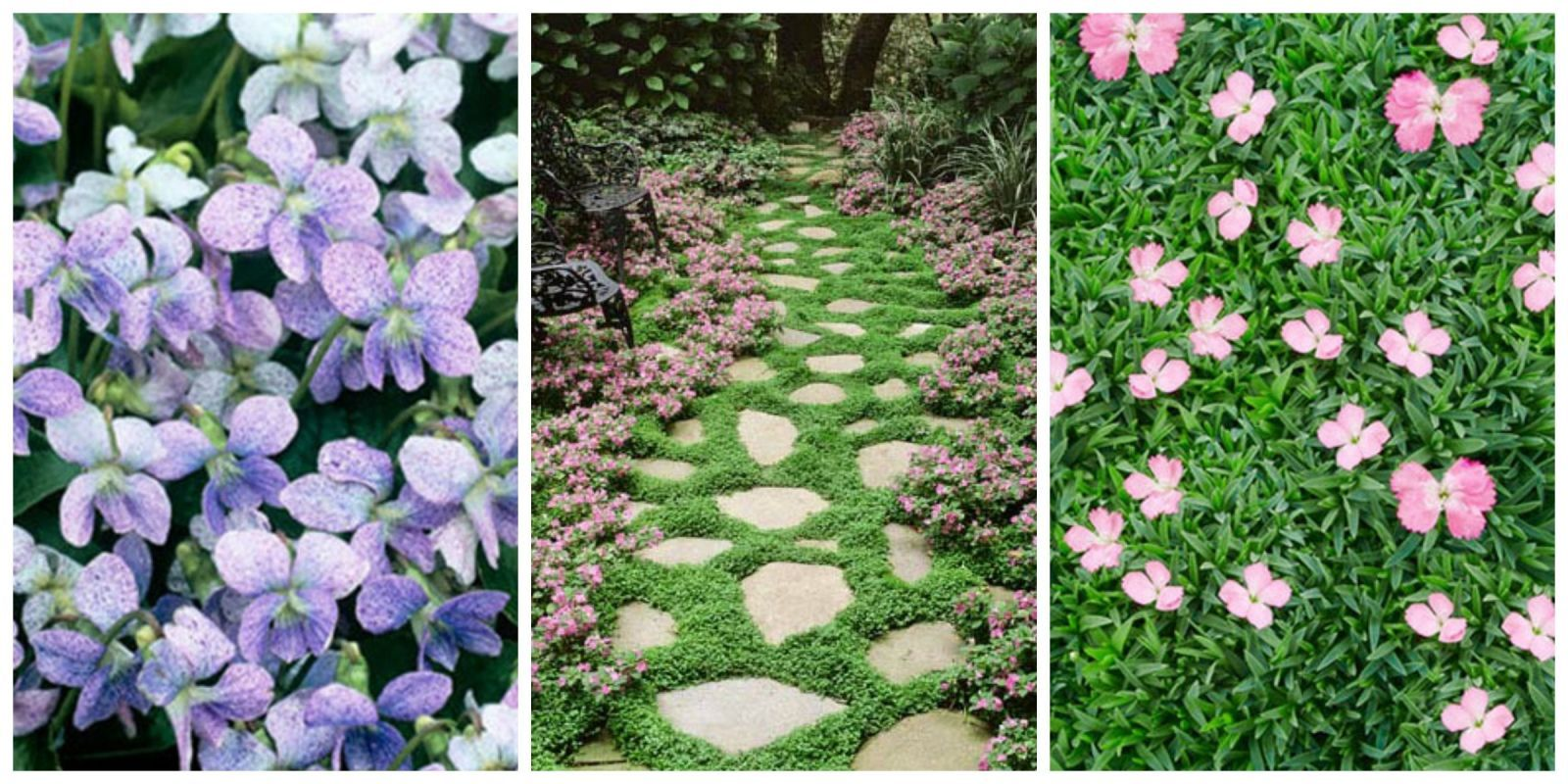 13 Of The Best Ground Cover Perennials For Your Yard Garden