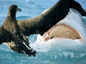 Shark Week #sharkweekfood