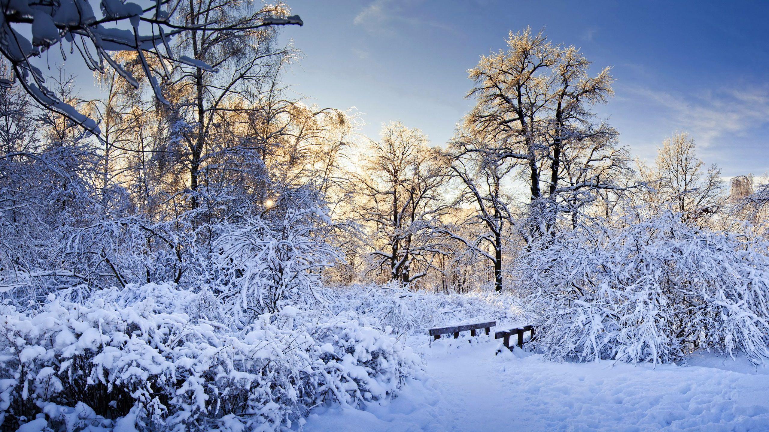 Neige épaisse, arbres, branches, hiver, les rayons du