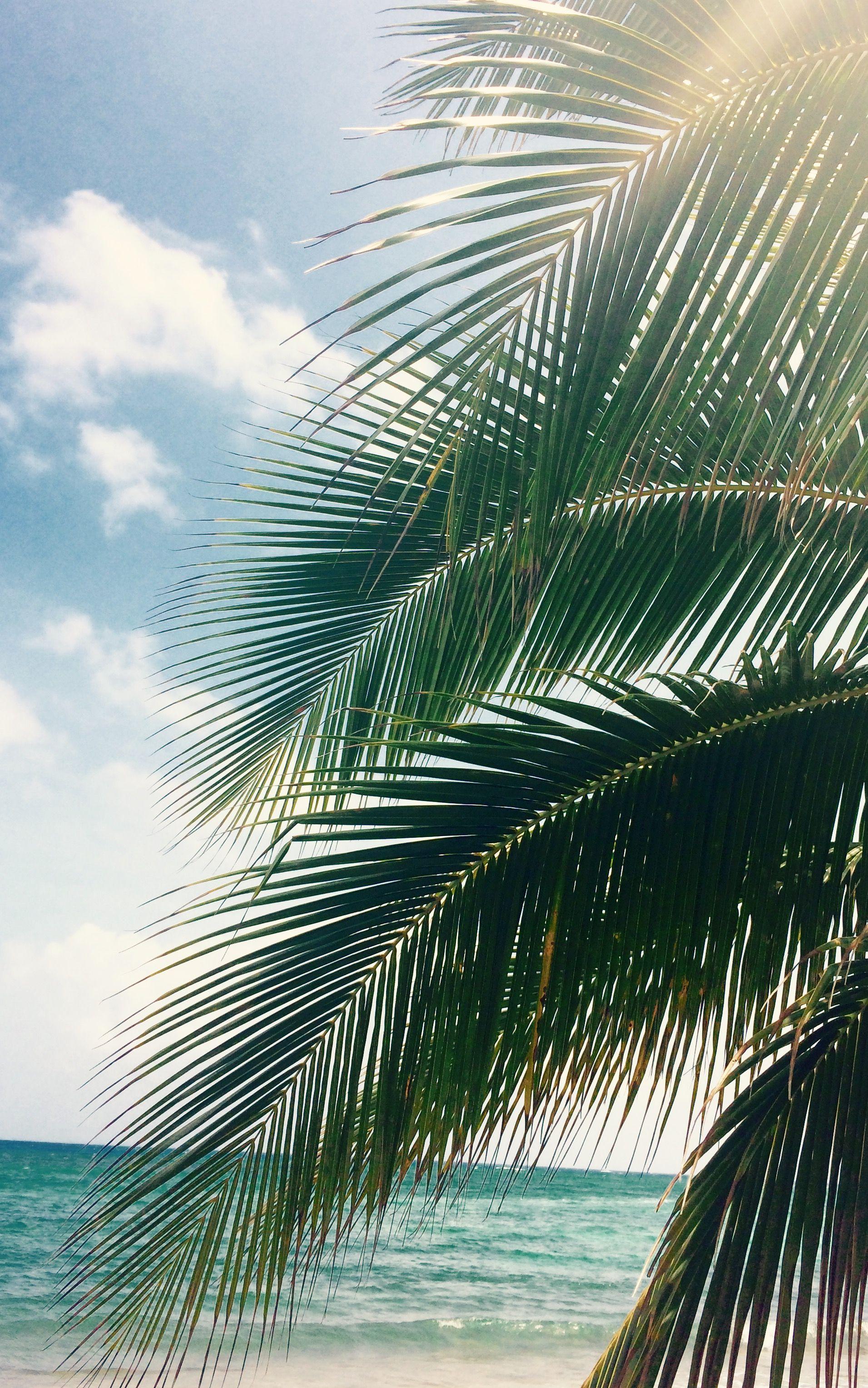 Jamaica Beach Wallpaper Iphone Summer Wallpaper Tropical Vibes
