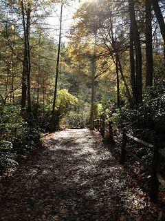 Dupont State Forest - North Carolina