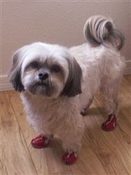 Mesh Reflective Dog Sandals Red Dogs Shih Tzu Mix Pet Care