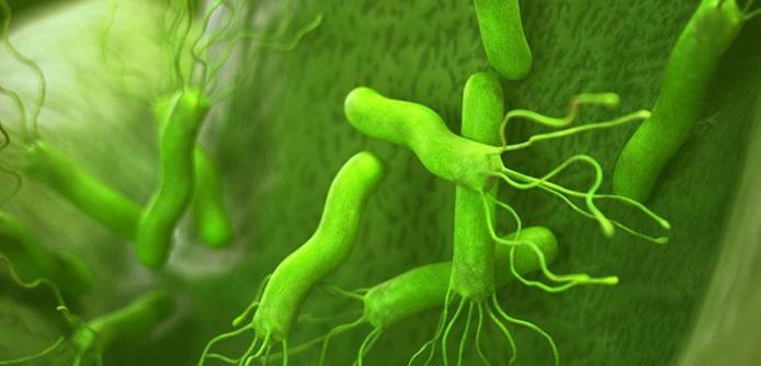 علاج جرثومة المعدة بالاعشاب مجرب Stuffed Peppers Vegetables Food