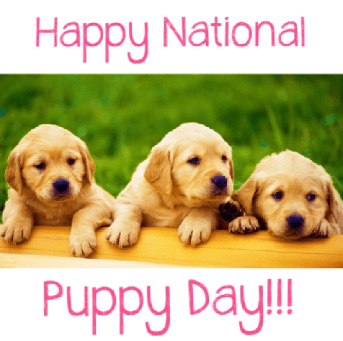 Happy National Puppy Day From Sofi Friends Funtastic Dog Clothes Patterns For The Little Dog Https Www Etsy Com In 2020 National Puppy Day Puppies Puppy Day