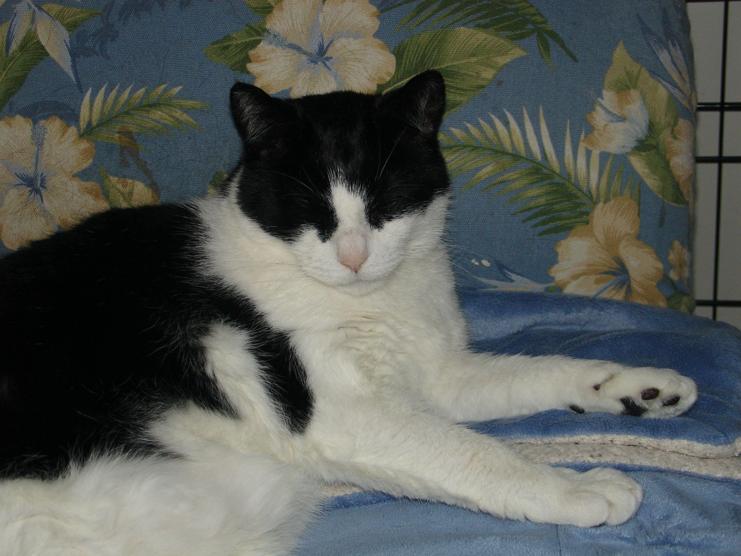 Treating My Cat S Chronic Diarrhea And Inflammatory Bowel Disease Cat Diarrhea Inflammatory Bowel Disease Cat Care
