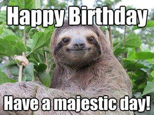 Happy Birthday Sloth Sloths My Spirt Animal Happy Birthday