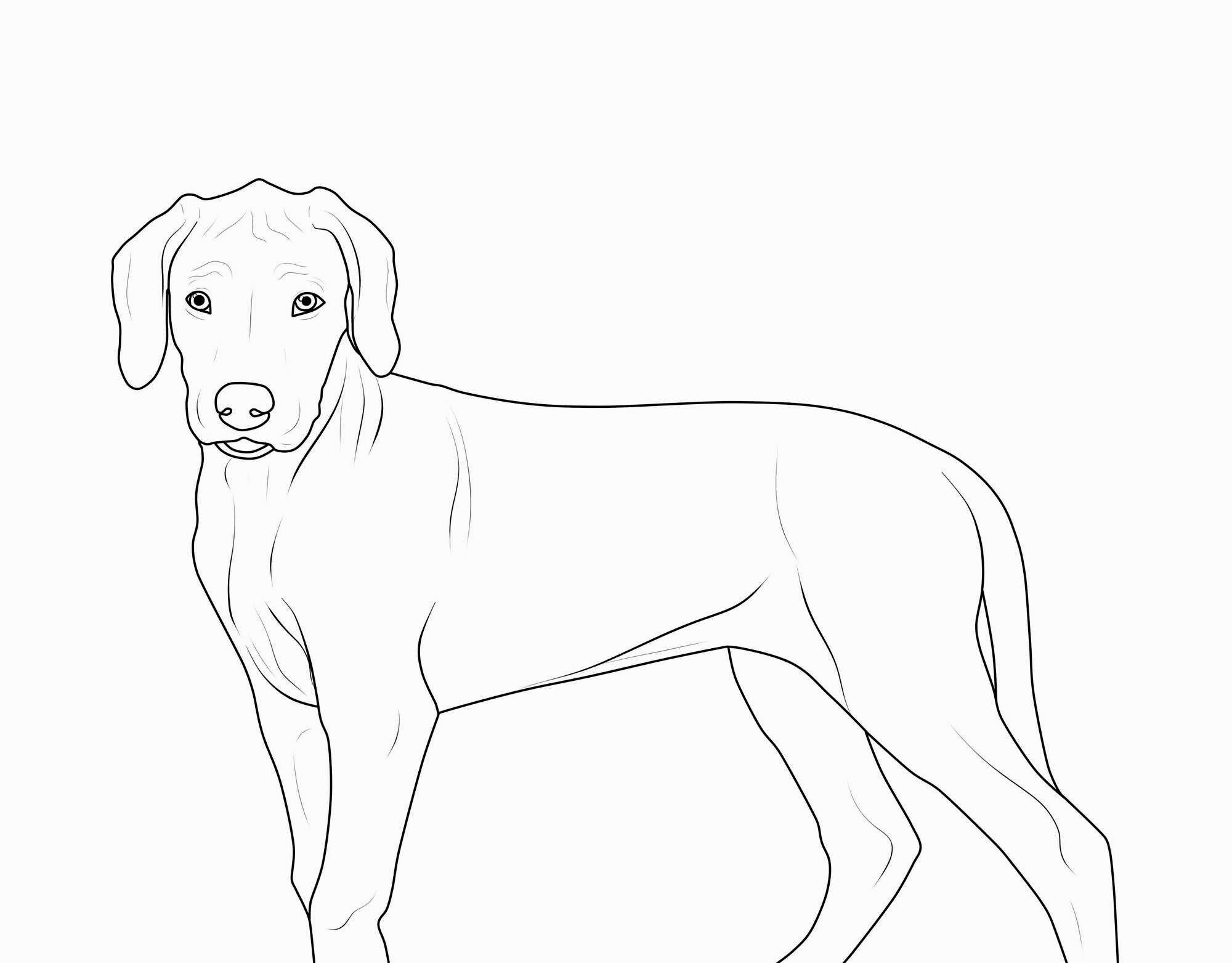 einzigartig malvorlage hund malvorlagen