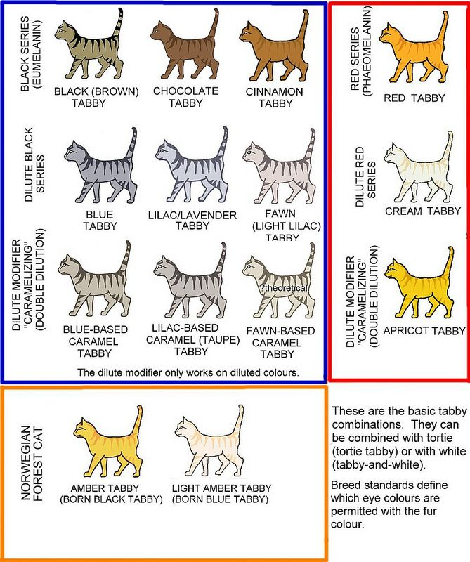 Tabby Colours Chart Orange tabby cats, Spotted cat, Cat