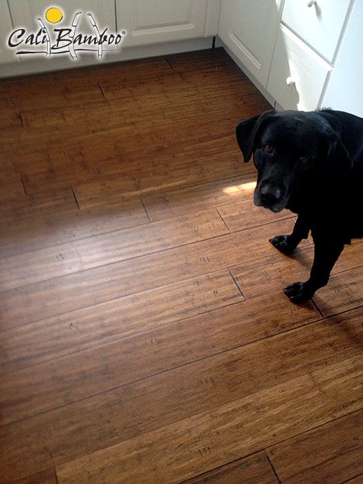 Antique Java Fossilized Bamboo Flooring Is Paw Approved Bamboo