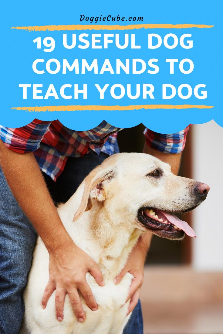 Useful Dog Training Tips