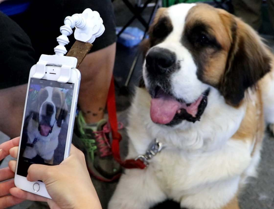 Flexy Paw This Gadget Helps You Take Pictures Of Your Dogs And