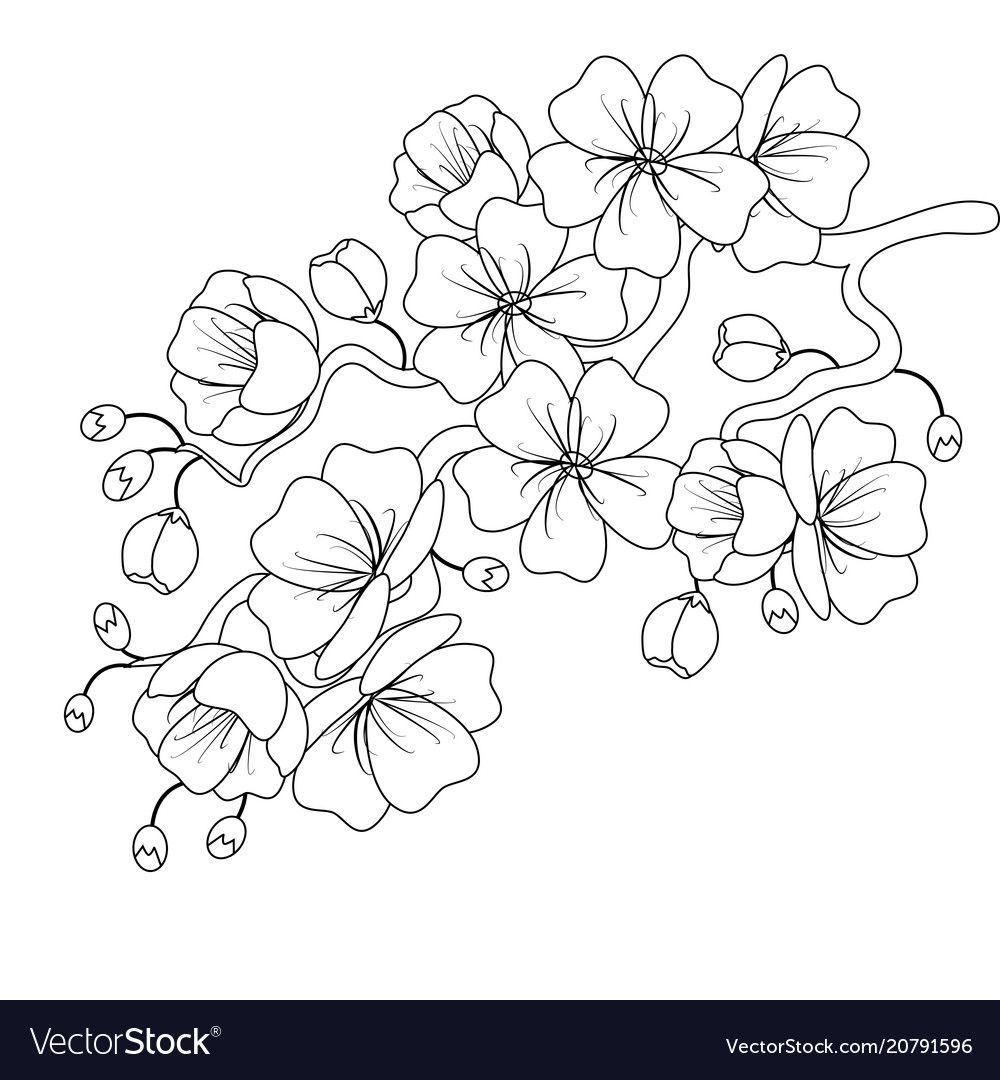 Black-and-white sketch of a cherry blossom branch Vector ...