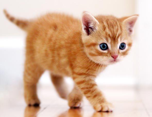 More Of Orange Tabby Nimbus Cat Attack Tabby Kitten Orange
