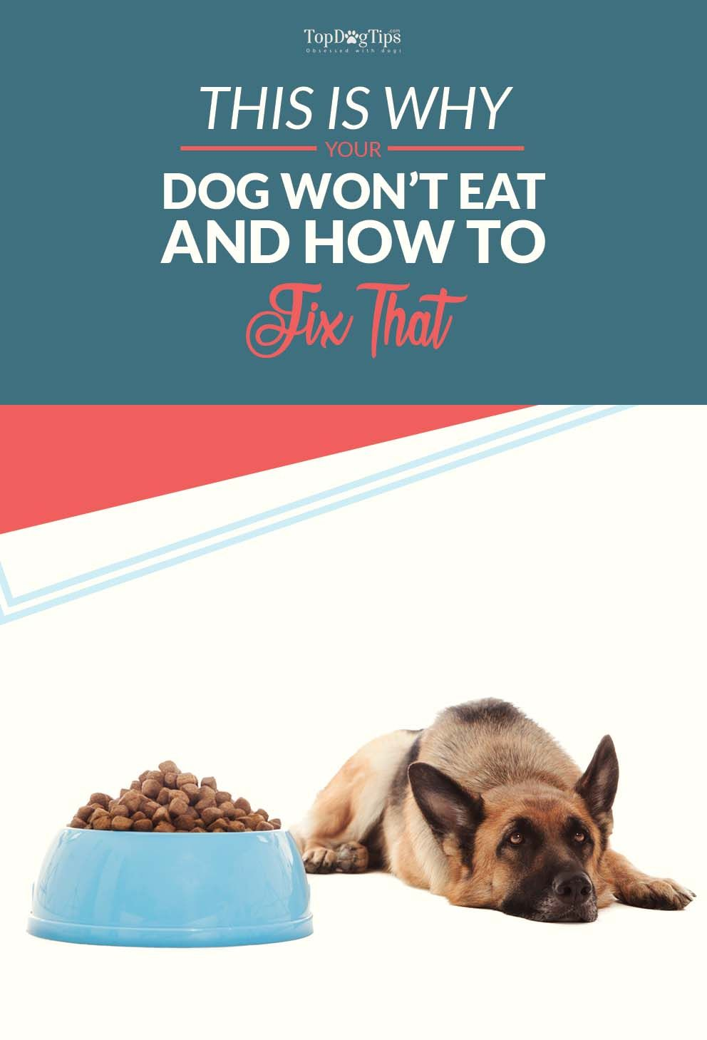 Why Won T My Dog Eat Here S Why Dogs May Refuse Food My Puppy