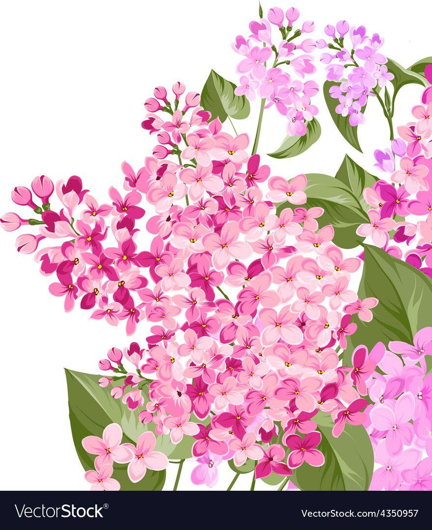 Pin by jiangwei on Flowers in 2020 Spring flowers