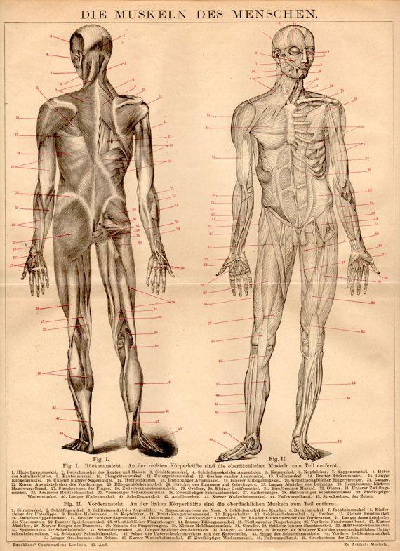 1885 Human Muscles Antique Print Human Body Anatomy Vintage Lithograph Anatomy Poster Muscular System Anatomy Body Musculature Human Body Anatomy Antique Prints Human Anatomy