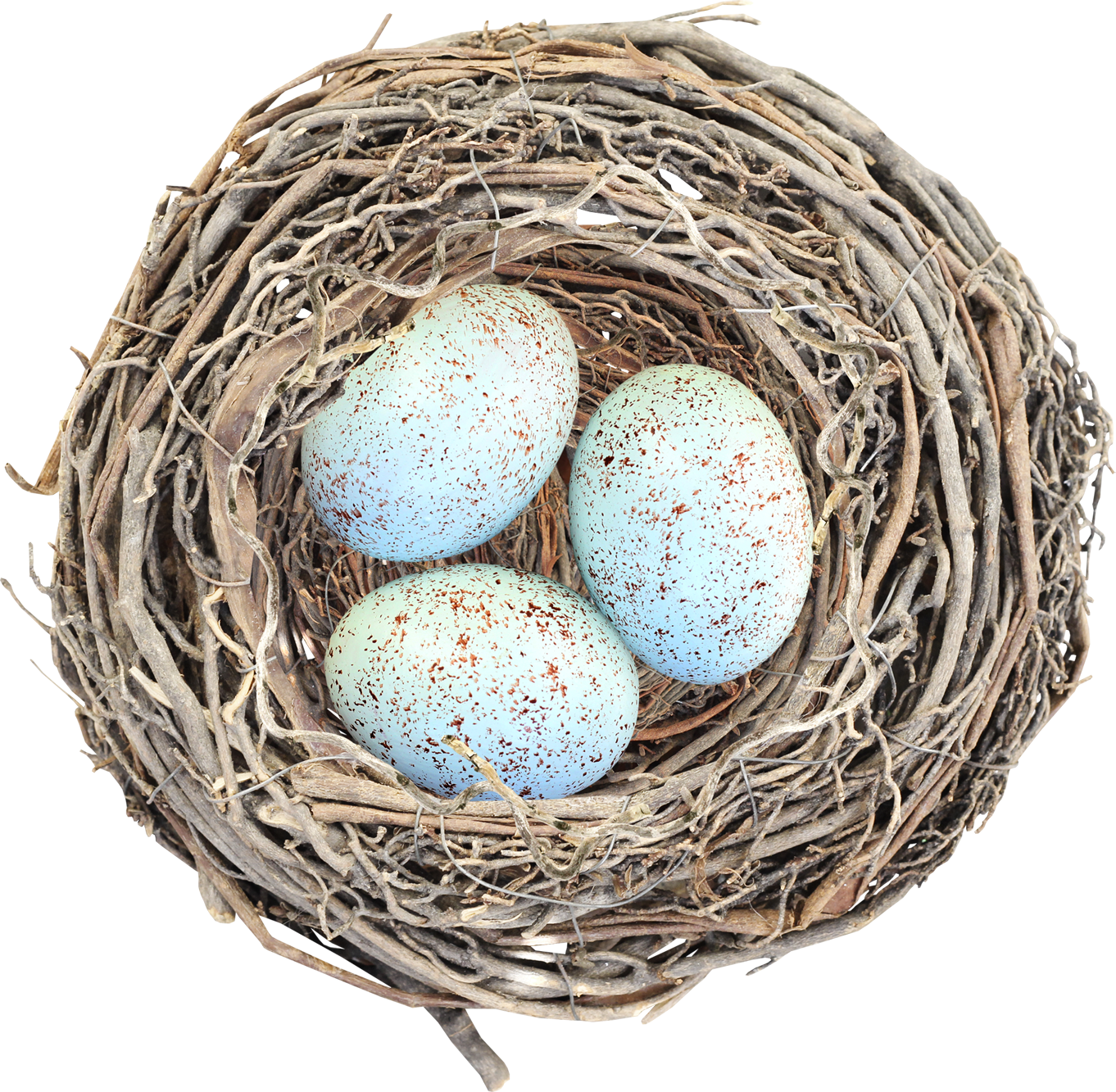 Nest Png Nest Images Social Insects Classes Of Vertebrates