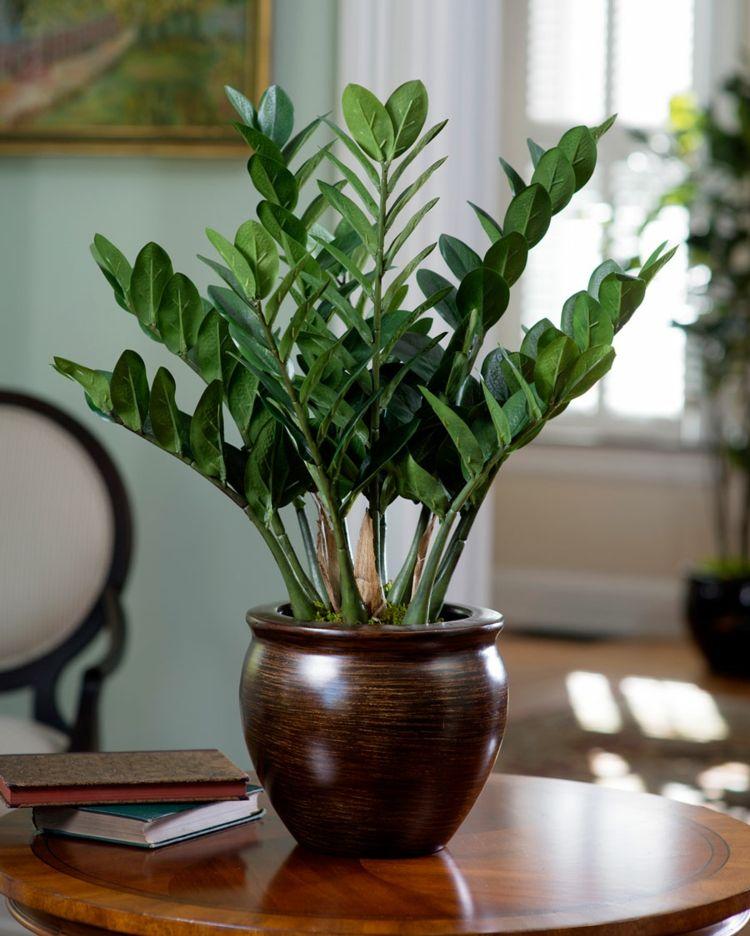 Exotische wohnzimmer zimmerpflanzen zamioculcas einfach dunkelgruen blattfarbe plants are - Zimmerpflanzen sukkulenten ...