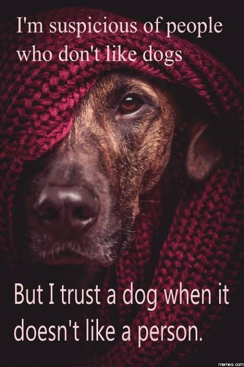 """so true. I trust my dogs before i trust somebody saying: """"Oh they're okay they're a good person."""""""