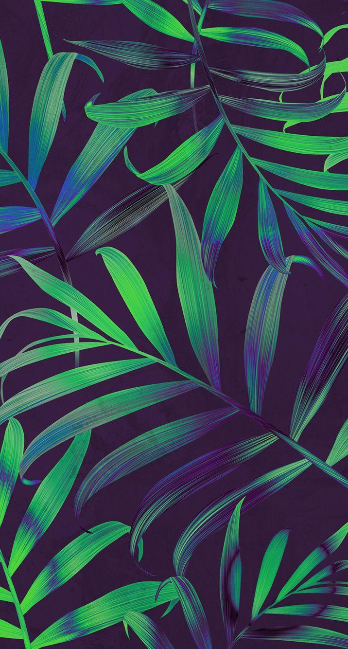 Summer, palm leaves วอลเปเปอร์, การถ่ายภาพธรรมชาติ, ใบไม้