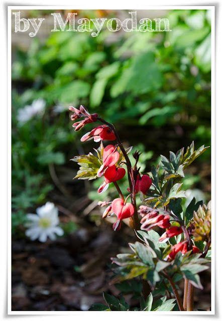 Tulpenzeit und frische Kräuter #garten #garden #Tulpen #frühling - umgestaltung krautergarten dachterrasse