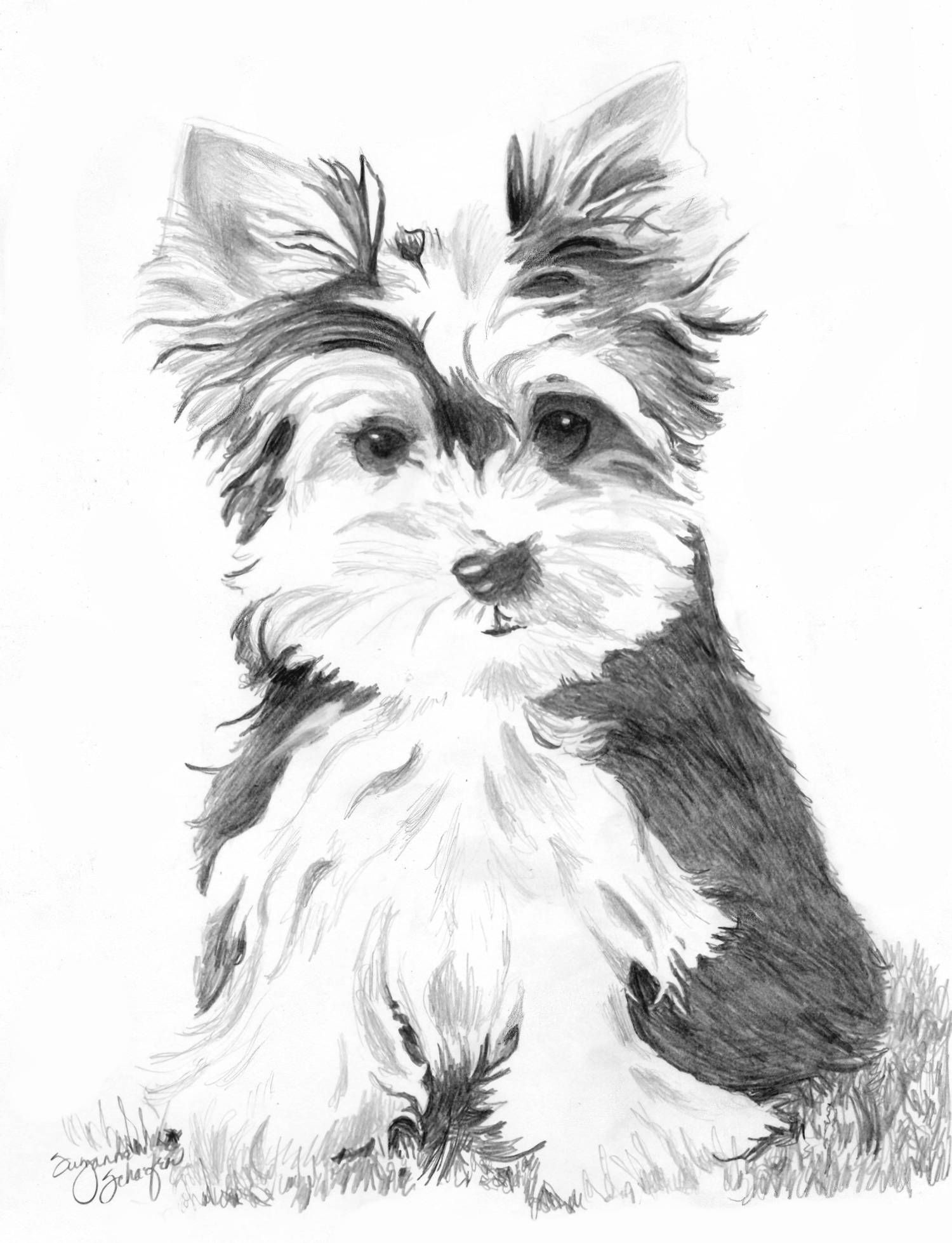 How To Draw An Yorkshire Terrier Yorkshireterrier Dog Art Dog Drawing Animal Drawings