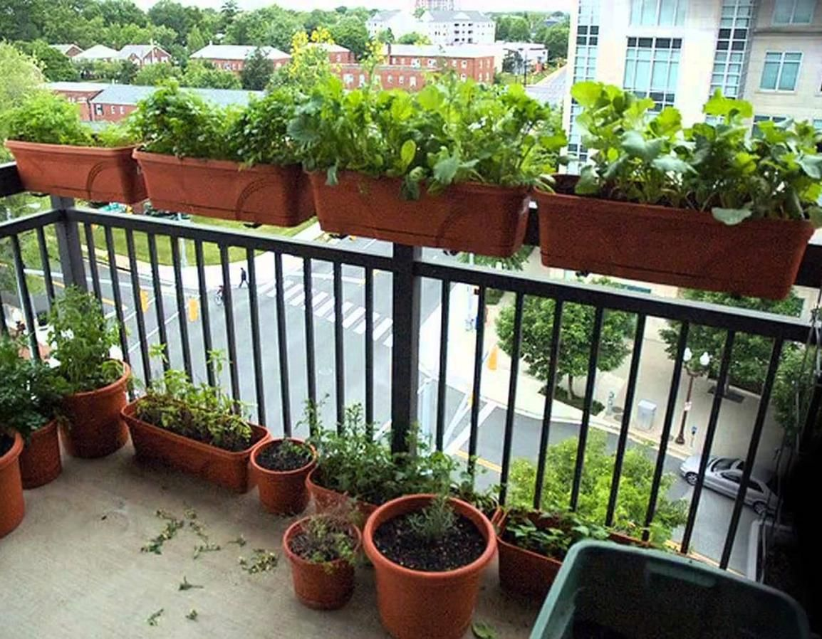 7 Easy Apartment Gardening Ideas for Beginners in 7  Small