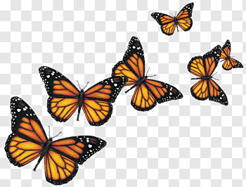 Pin By Neptuno Diaz On Como A Hacer Vectores Orange And Black Butterfly Yellow Butterfly Tattoo Black Butterfly
