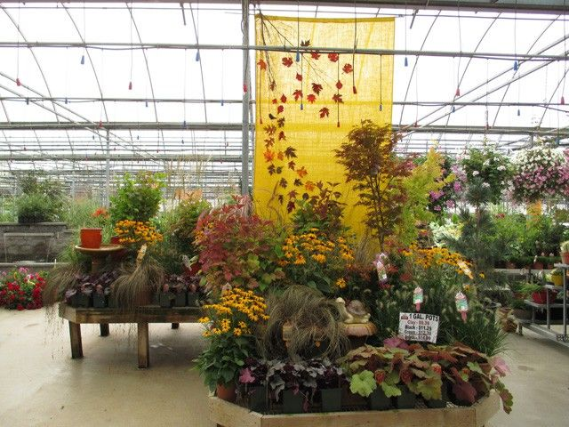 Fall Perennials Sipkens Nurseries Garden Center Displays Perennials Fall Perennials