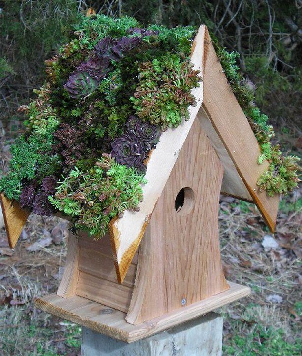 Pin By Cindy Tarrant On Succulents Bird Houses Diy Bird