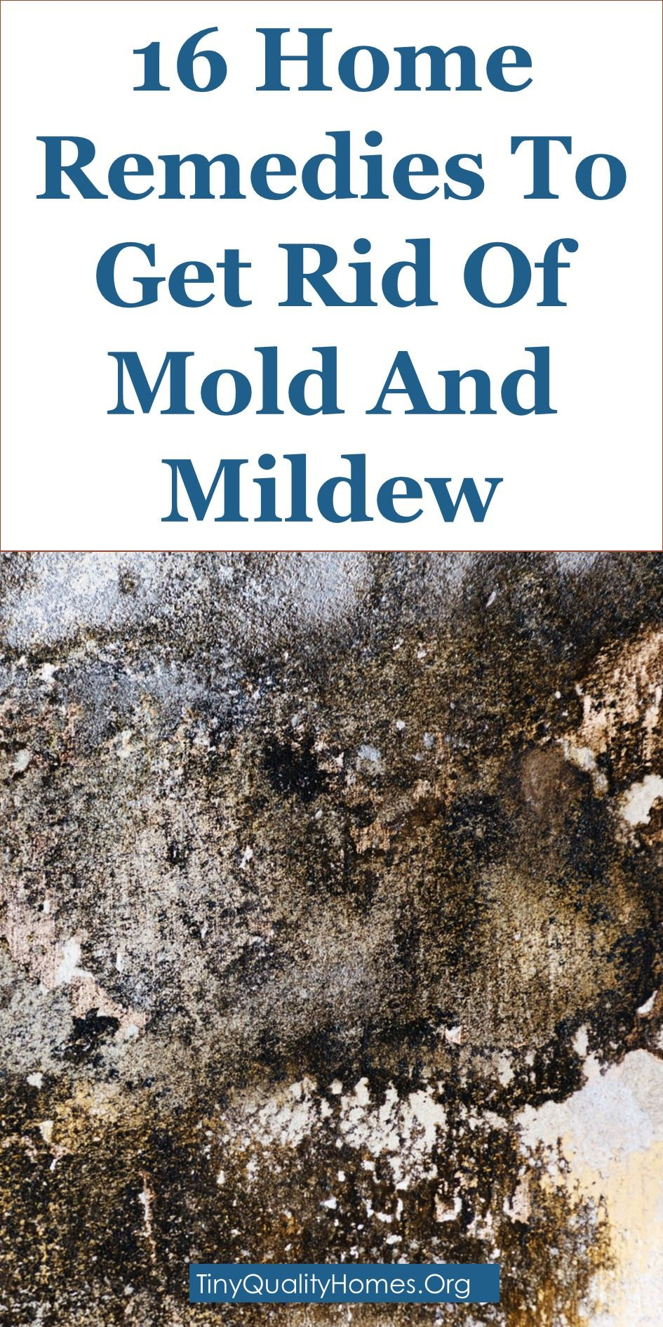 16 Home Remedies To Get Rid Of Mold Mould And Mildew