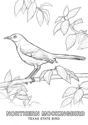 Texas State Bird Coloring Page Bird Coloring Pages Flag