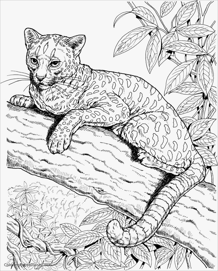Realistic Cheetah Coloring Page in 2020 Animal coloring