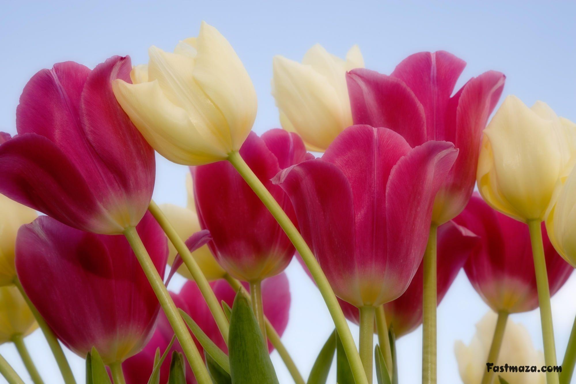 3d pretty flower hd wallpapers | 3d flowers hd wallpapers,download