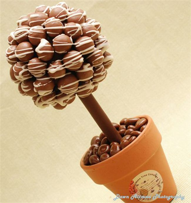 Google Image Result for http://www.site-fusion.co.uk/files/writeable/uploads/webfusion30951/image/sweet-tree1.jpg