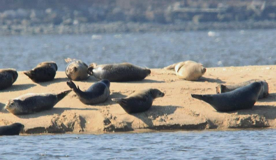 Seal watching in April.  Out of Noank, Connecticut.