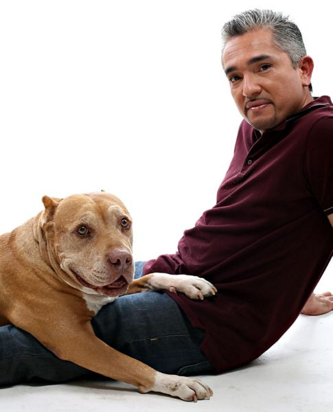 Smashing Writer S Block To Bits And Pieces Dog Whisperer Cesar