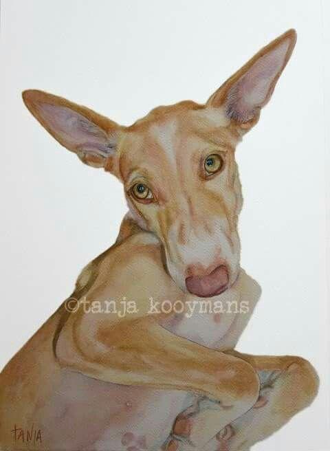 Podenco portrait by Tanja Kooymans