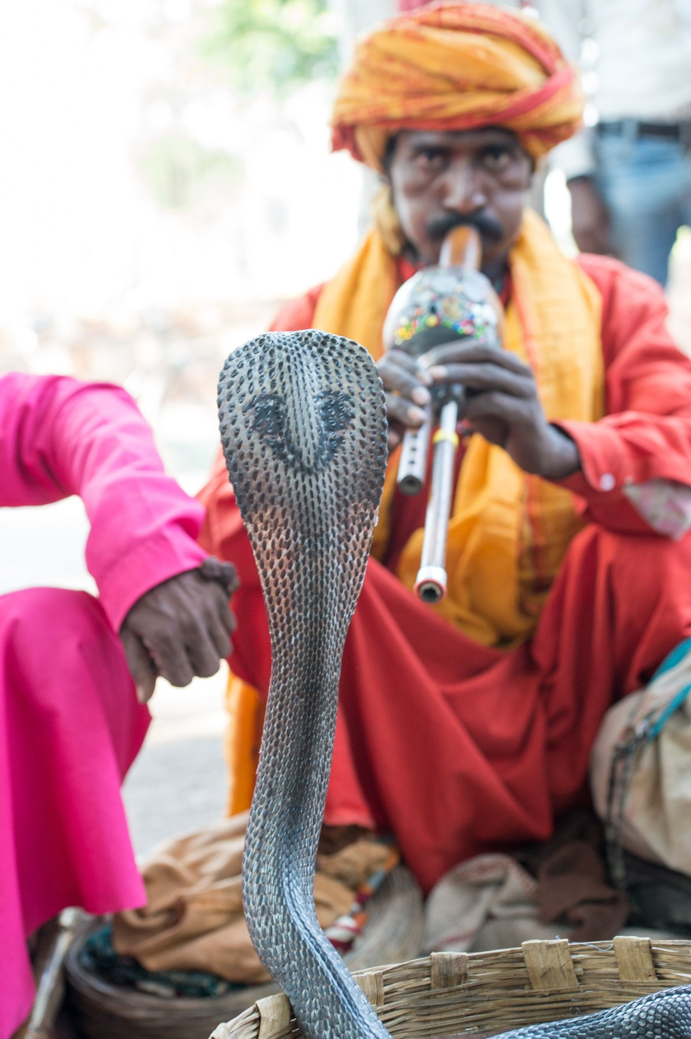 Cobra Snake Charmer India With Images Snake Charmer India People