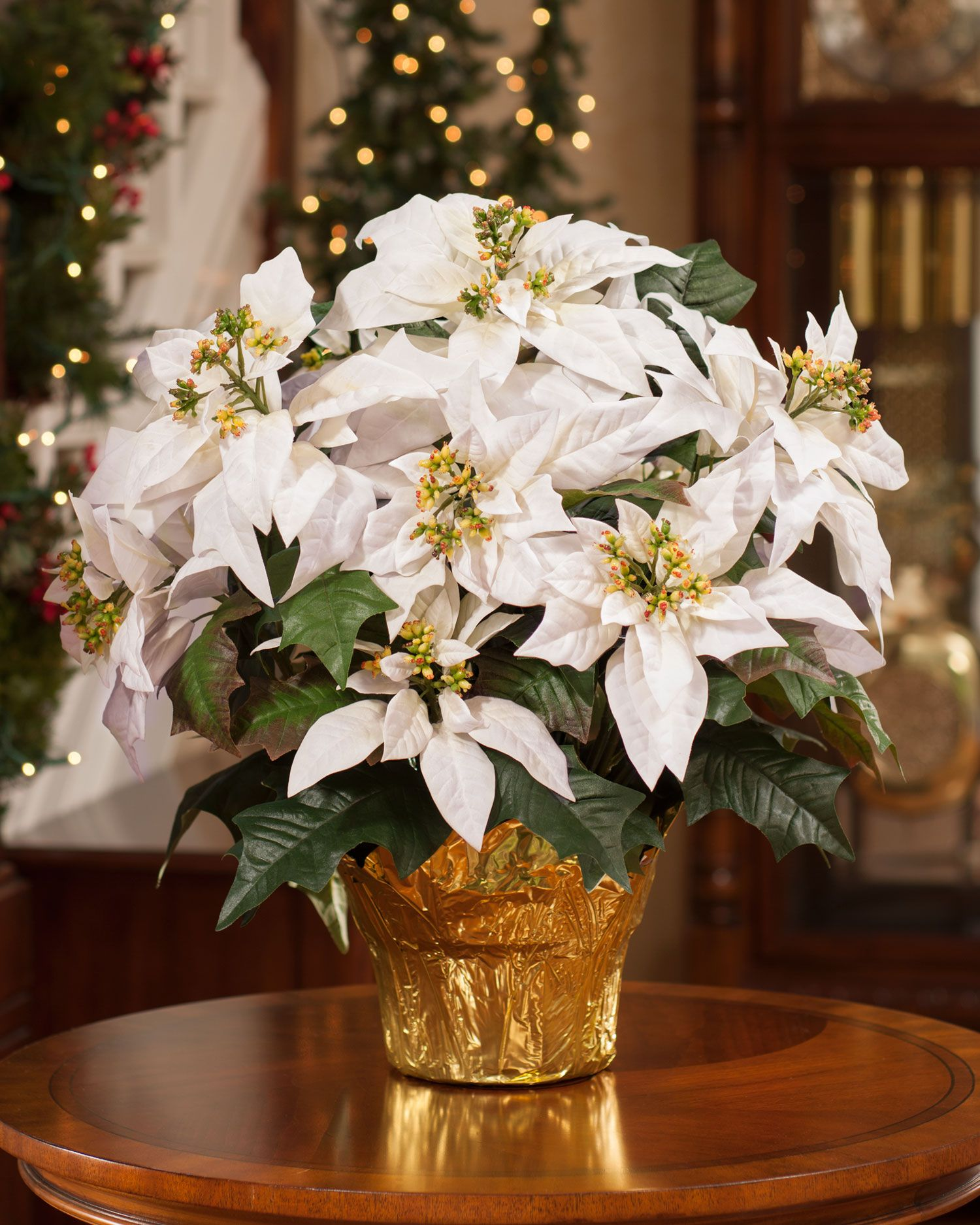 Pictures Of White Poinsettias - Garden Inspiration
