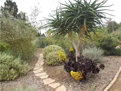 san diego garden ideas