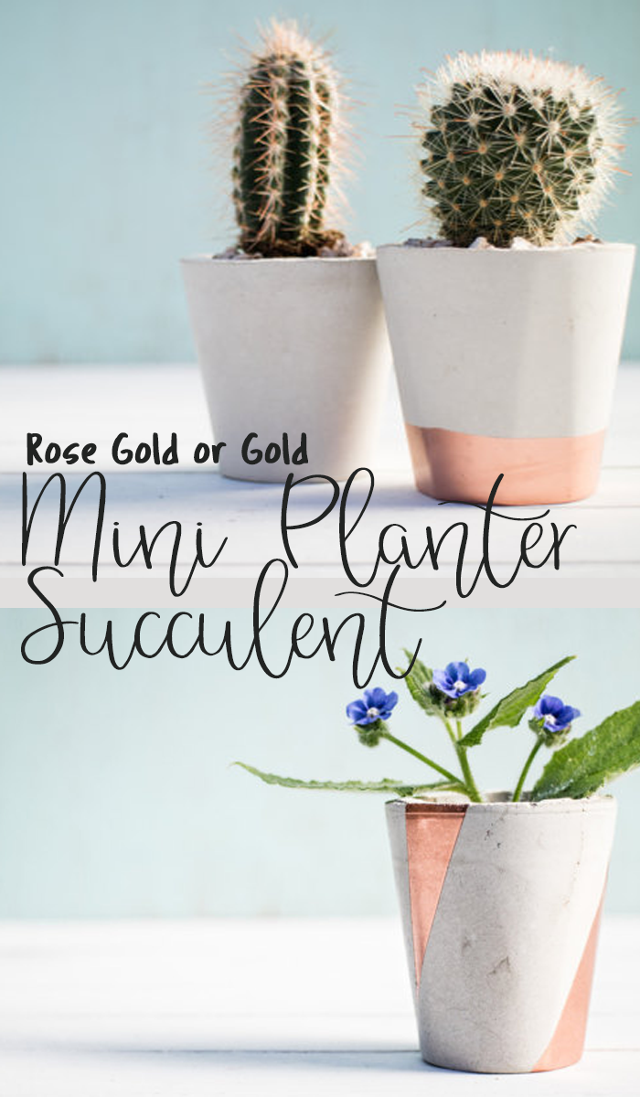 Mini Planter Succulent is perfect for baby plants until they are ...