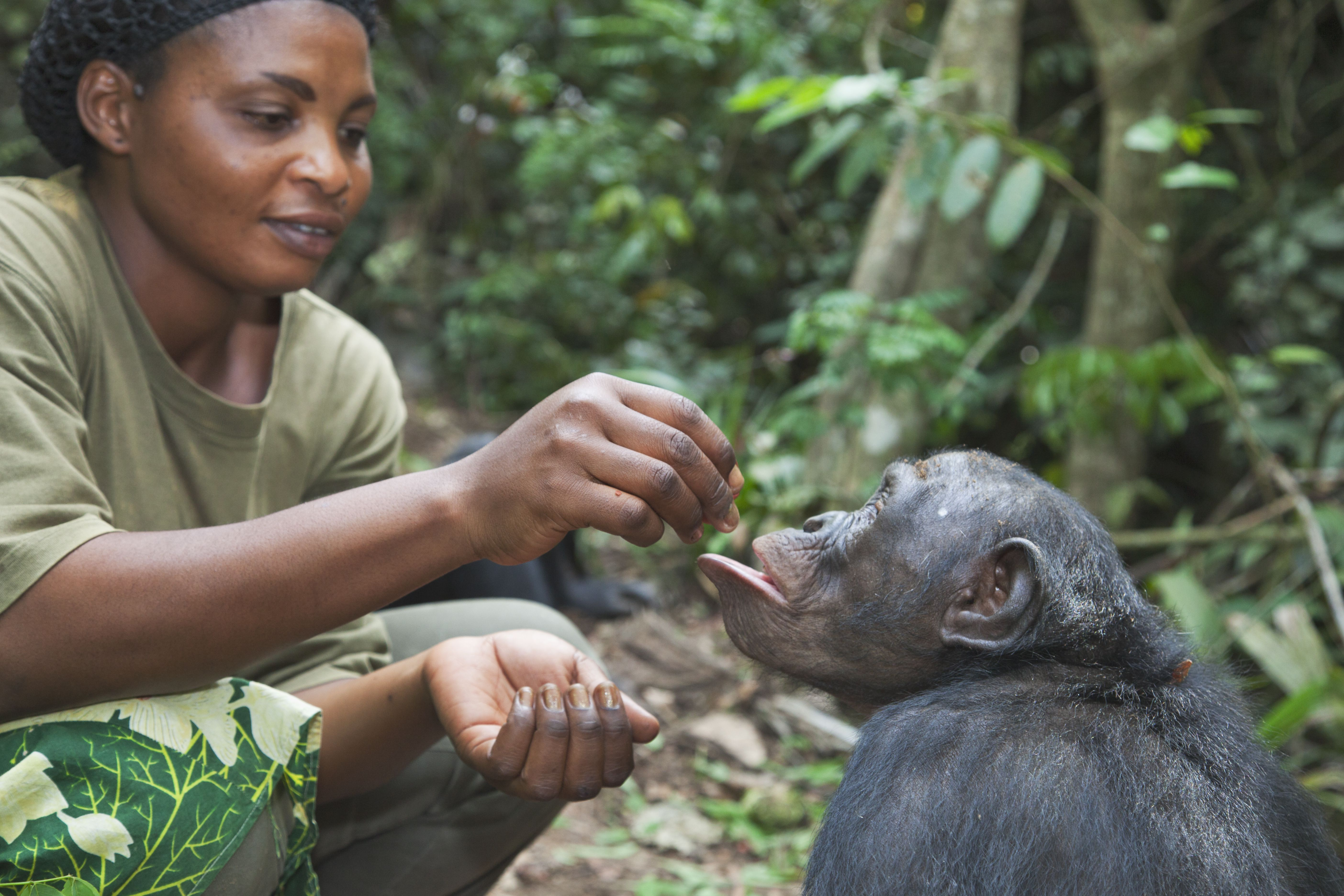 Learn about being a zoologist which studies a variety of