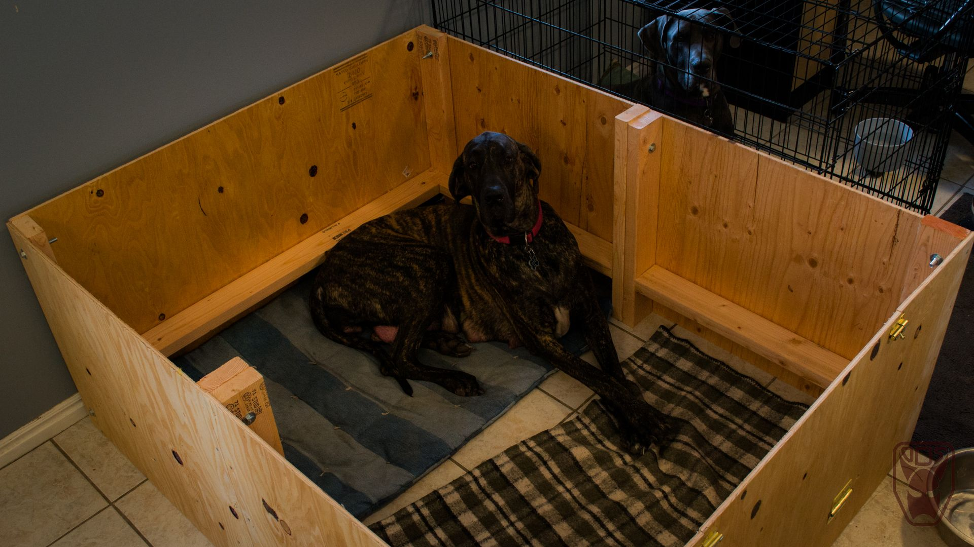 Building A Whelping Box For Our Great Dane Whelping Box